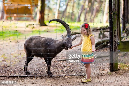Little girl feeding wild goat at the zoo : Stock Photo