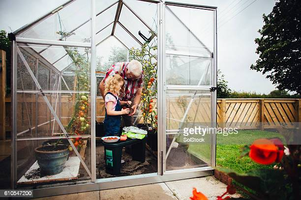 Little Girl Helping Grandad Do the Gardening