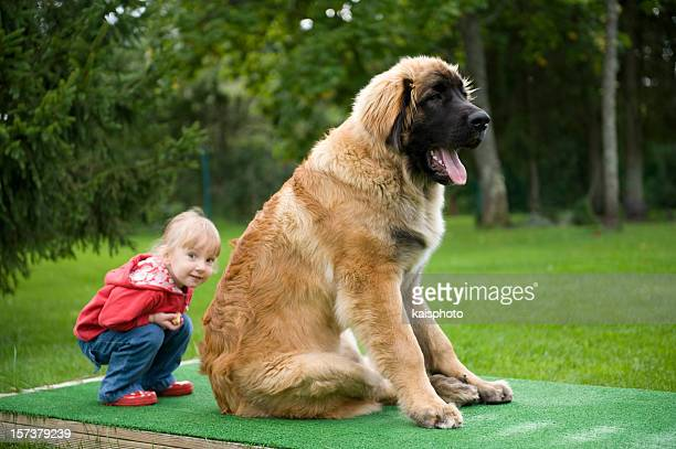 Little girl hiding behind a 6 month old Leonberger puppy