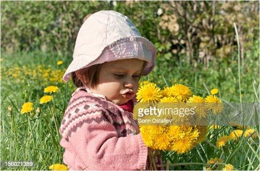 Little girl holding dandelions : Stock Photo
