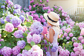 Little girl is in bushes of hydrangea flowers in sunset garden. Flowers are pink, blue, lilac and blooming in town streets. Kid is in pink dress, straw hat. Romantic concept of childhood, tenderness.