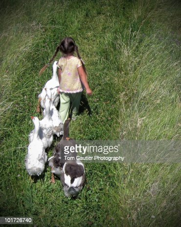 Little girl leads flock of geese on grassy path