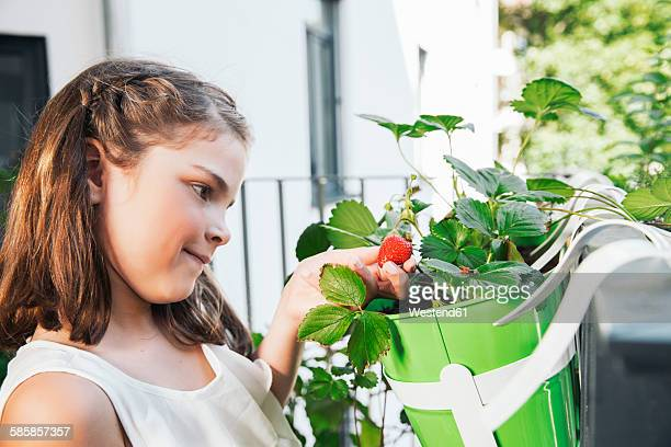 Little girl looking at strawberry on balcony