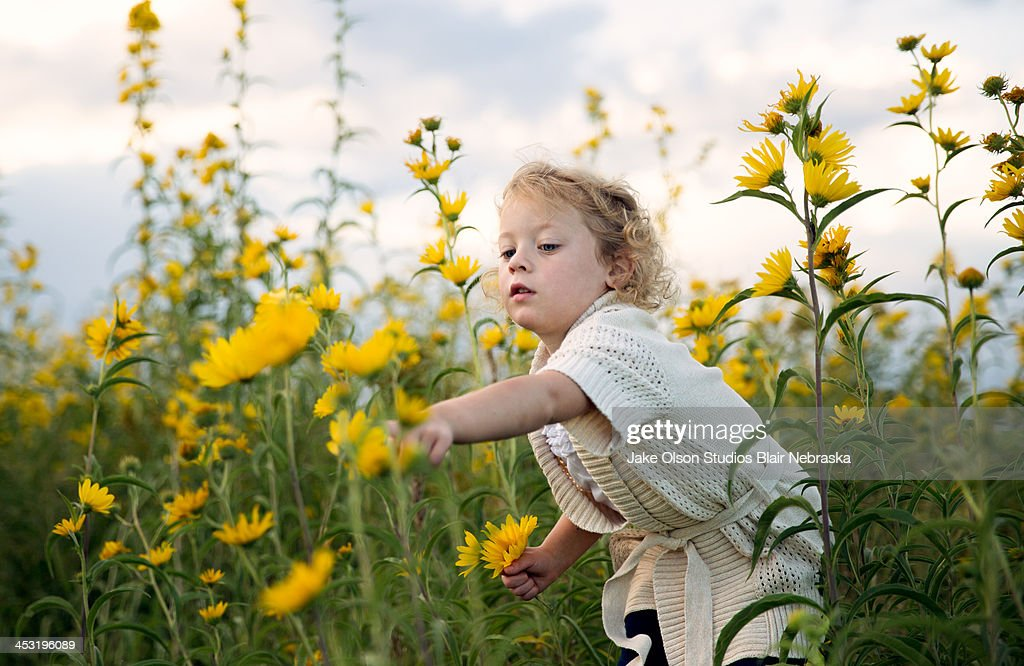 Little girl picking flowers : Stock Photo