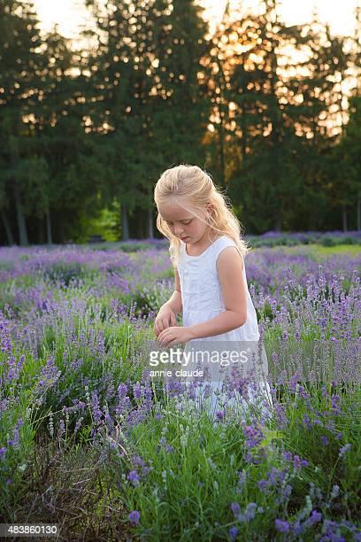 Kleine Mädchen pflücken Lavendel Blumen in der Nähe von Wald