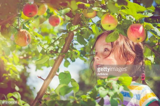Petite fille, ramasser les pommes