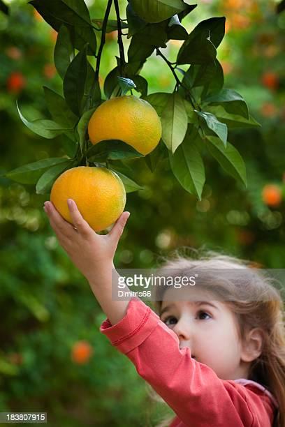 Little girl reaching an orange