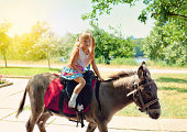 Little girl riding on a donkey in the park
