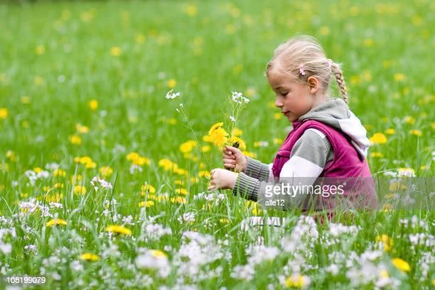Kleines Mädchen sitzen In der Wiese Feld pflücken Blumen