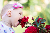 Little girl is sniffing a rose in a flower garden.