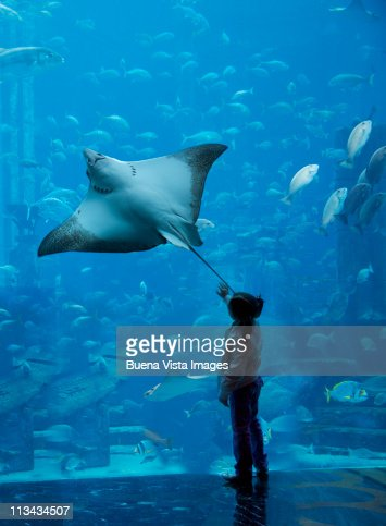 Little girl watching a stingray