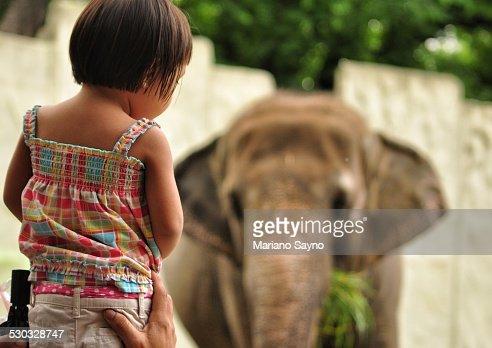 A little girl watching an elephant