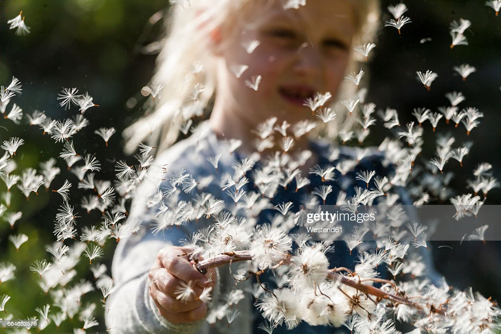 Little girl watching flying seeds of an umbel