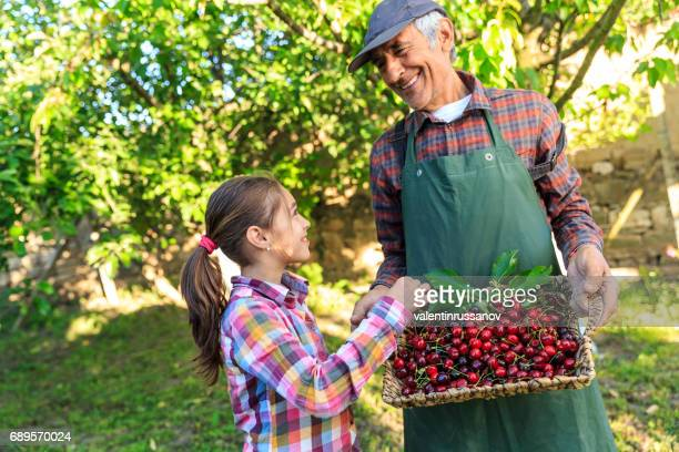 Little girl with his grandfather in cherry garden