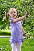 little girl with pigtails in amazement looks at apples on a branch