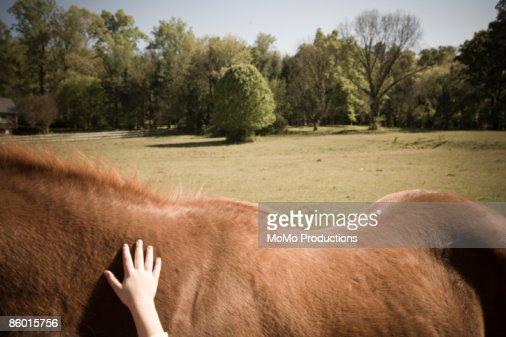 Little Girl's hand on horse's back  : Stock Photo