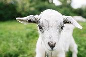 Farming Animal Domestic Pets Summer Season Kid Fauna Nature Concept