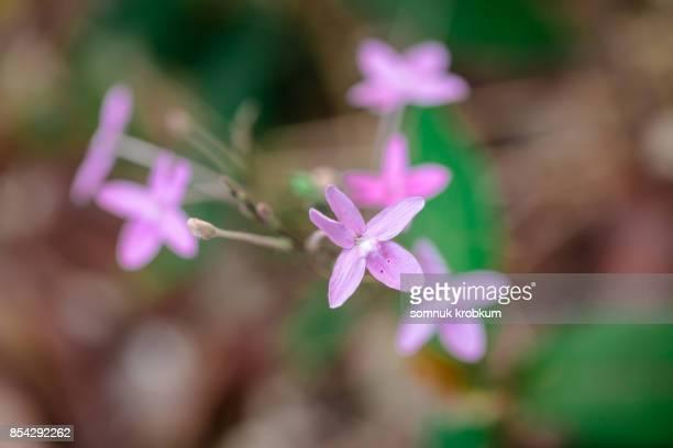 Little grass flower