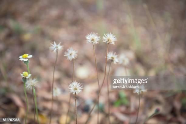Little grass flowers