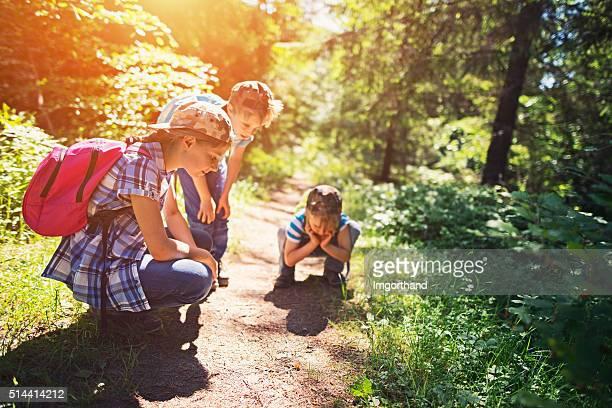 Paar Wanderer beobachten kleine Käfer auf Waldweg