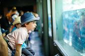 Little kid boy admire different reptiles and fishes in aquarium through the glass in zoo. Happy school child watching and observing animals and reptiles. Family leisure with kids