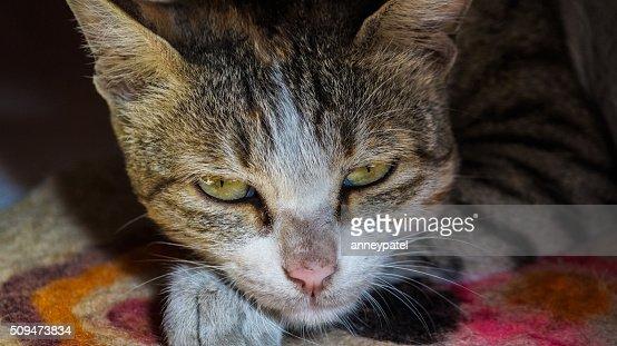 Little kitten lying on the blanket looking straight at camera : Stock Photo