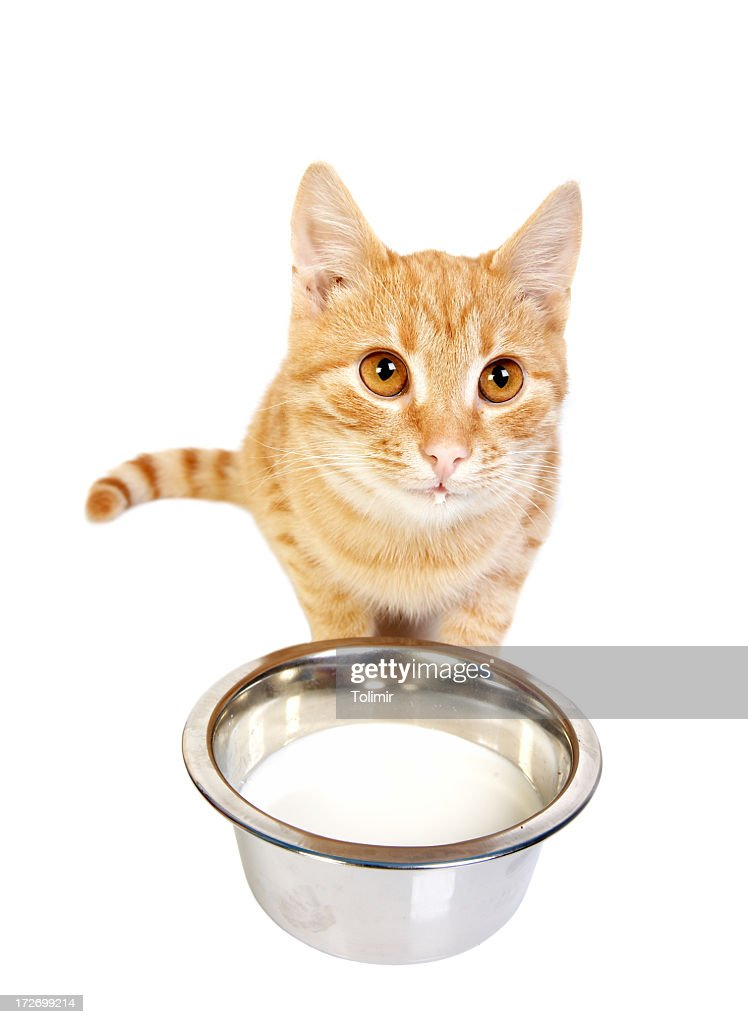 Little kitty : Stock Photo