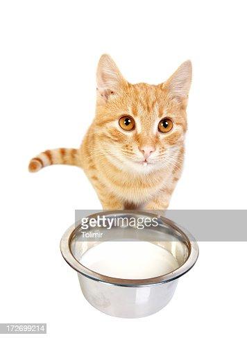 Little kitty : Stock Photo
