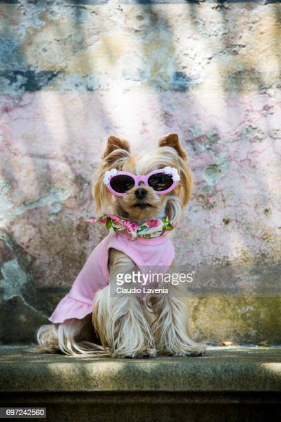 Little Lola Sunshine the dog poses for photographer wearing a pink dress during Pitti Immagine Uomo 92 on June 12 2017 in Florence Italy