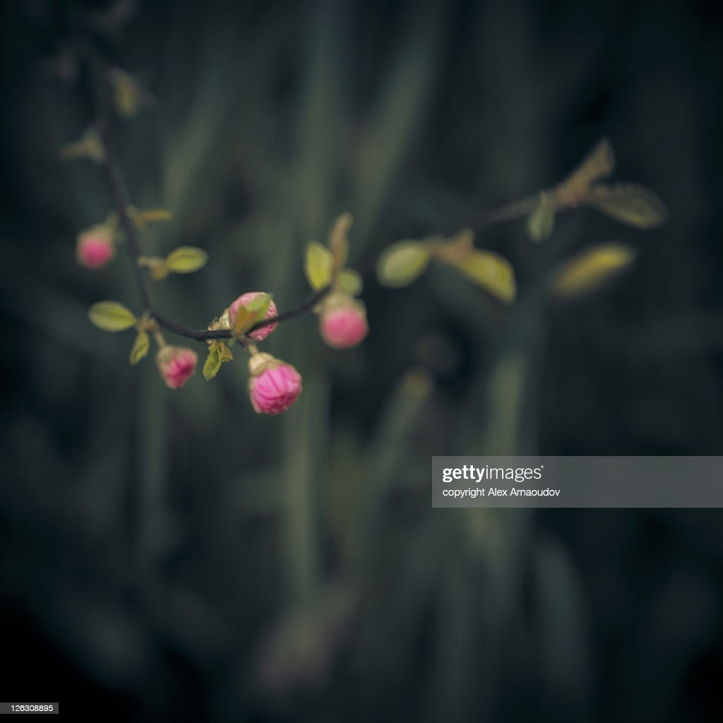 Little Marvels of spring : Stock Photo