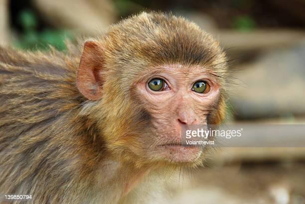 Little monkey face