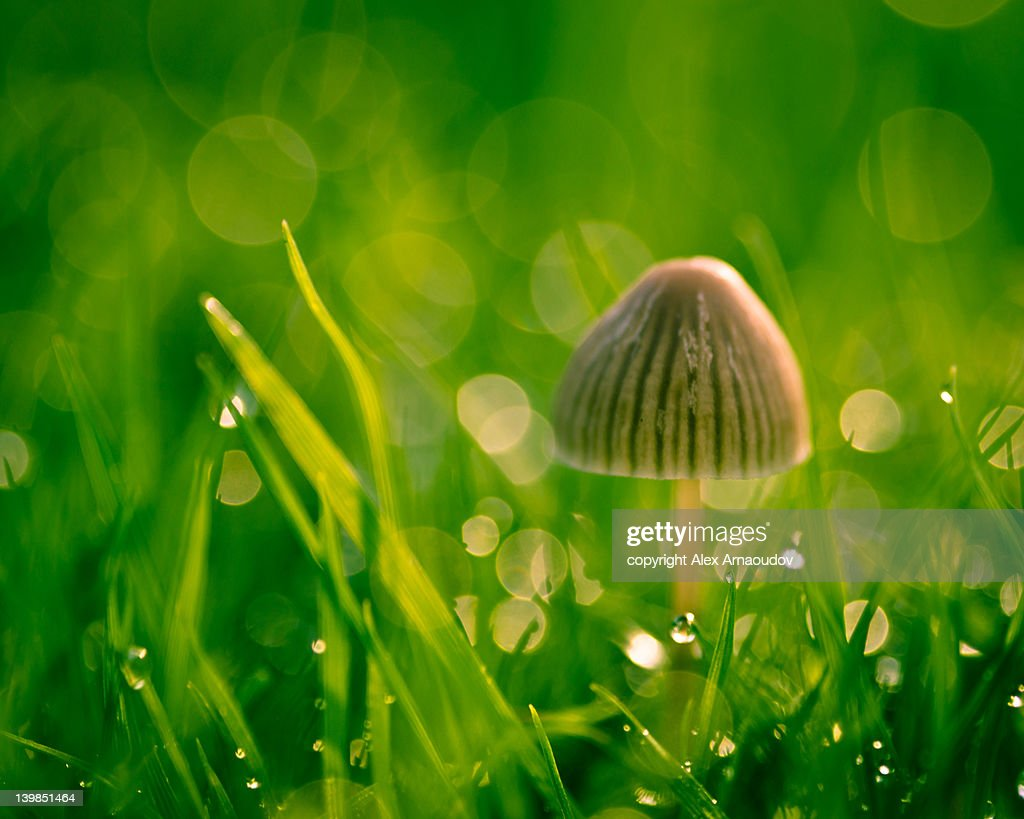 Little mushroom, big bokeh : Stock Photo