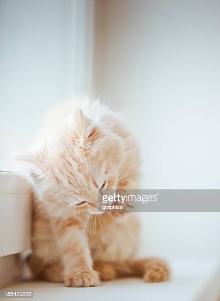 Little getigerten Katzen