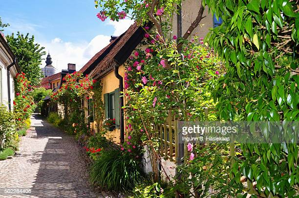 Little picturesque street in Visby Gotland Lots of flowers roses and green leaves in front of and between houses