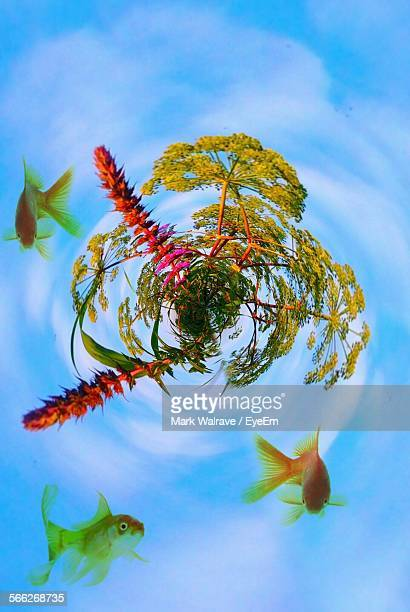 Little Planet Effect On Fish Swimming By Trees Against Sky
