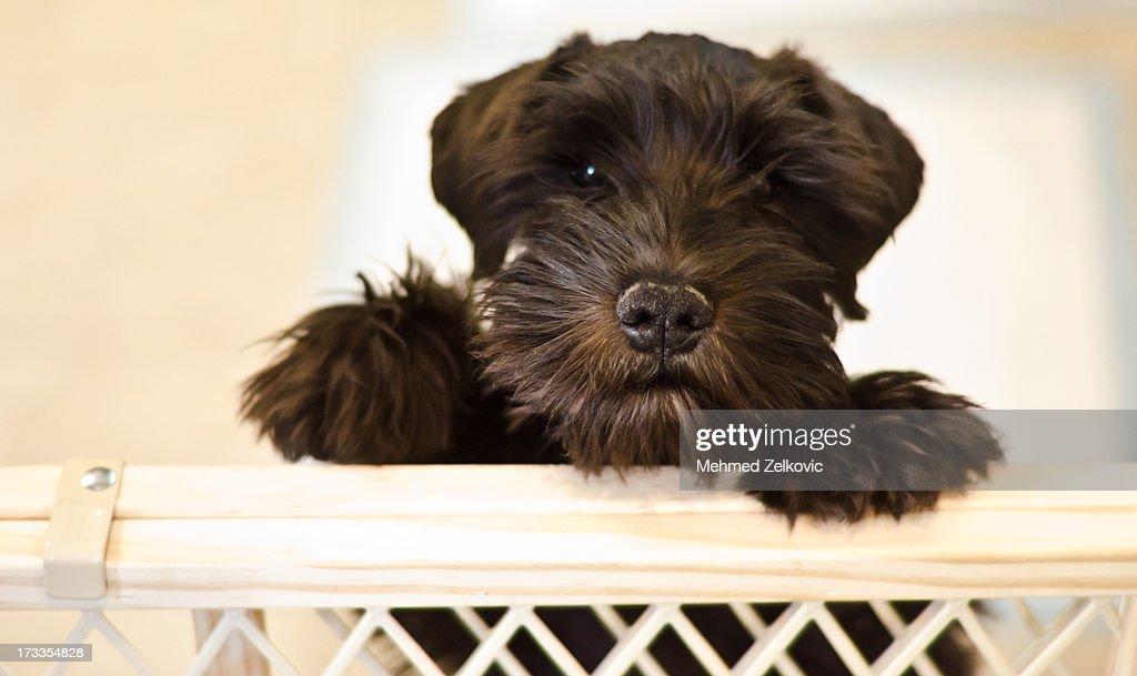 Little puppy looking sad : Stock Photo