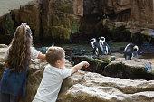 Little siblings looking at penguins at the aquarium