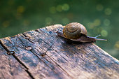 Little snail on wooden table with bokeh ground