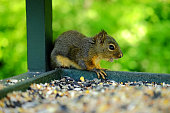 Little Squirrel Is Curious About Me
