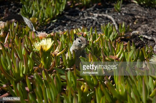 Little Squirrel : Stock Photo