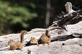 Little squirrels on wood