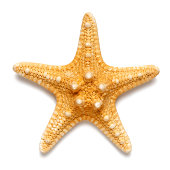Little starfish yellow color isolated on white background
