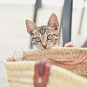 Little stray cat