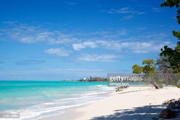 Little Tree At Caribbean Beach