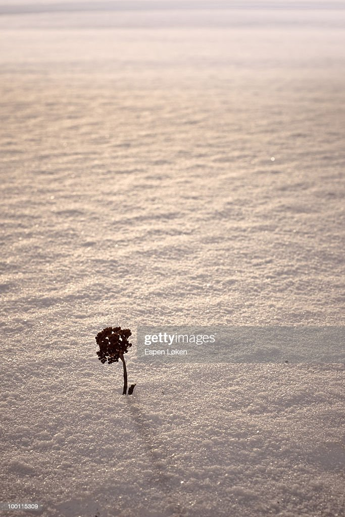 Little tree in the snow : Stock Photo