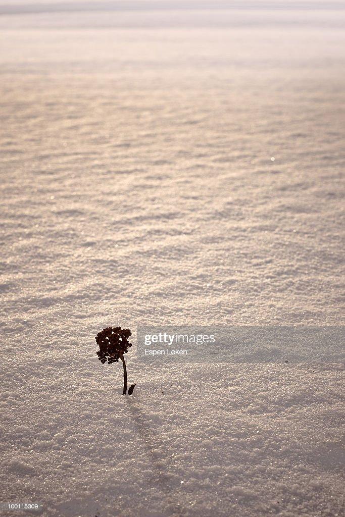 Little tree in the snow : Foto de stock
