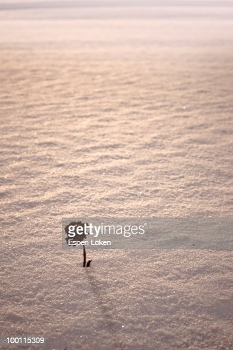 Little tree in the snow : Foto de stock