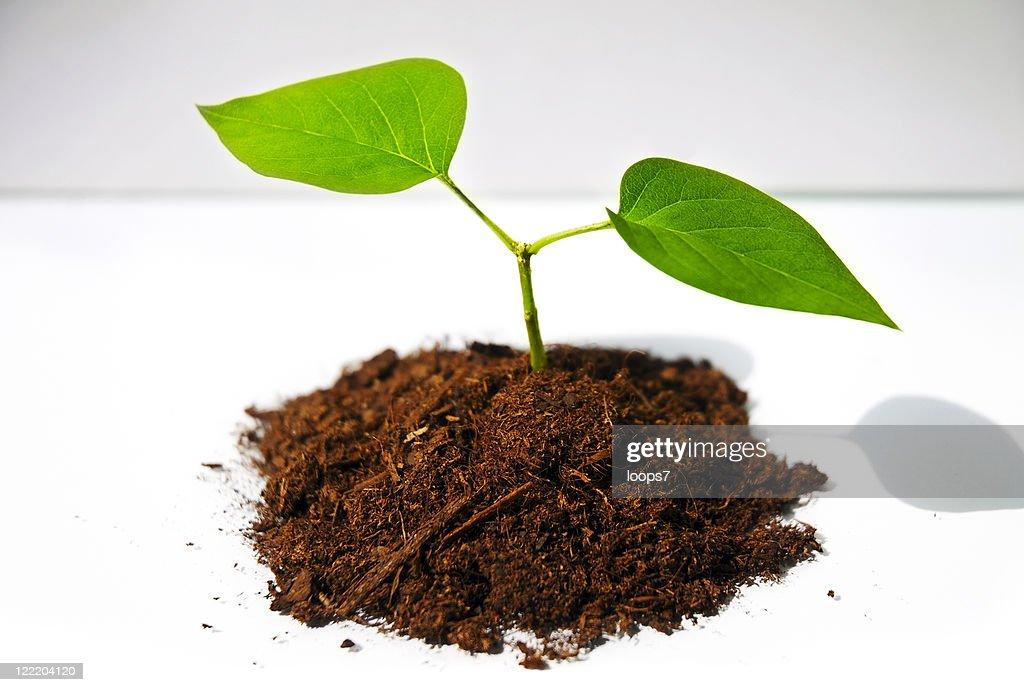 little tree : Stock Photo