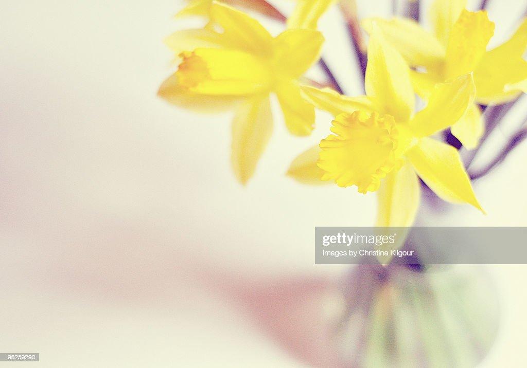 Little vase of sunshine : Stock Photo