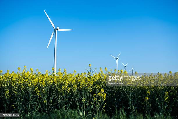 Little wind turbine